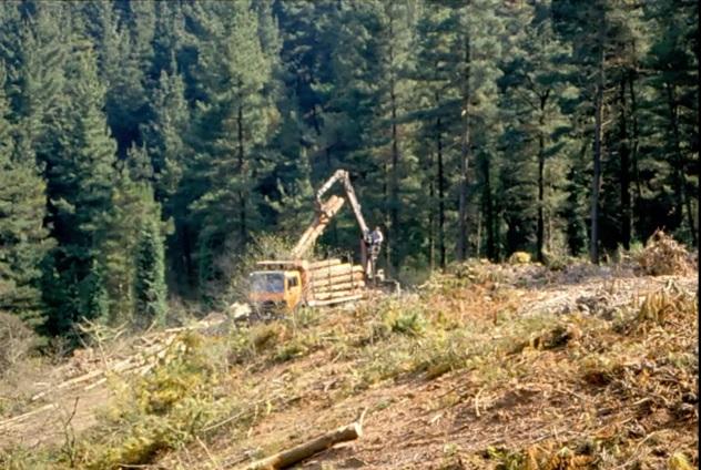 La Junta licita tratamientos silvícolas preventivos de incendios y otras mejoras en 353 hectáreas de Tierras Altas, Soria