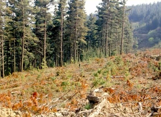 Más de 4,2 millones para tratamientos silvícolas preventivos de incendios forestales en las provincias de Palencia, Segovia, Soria y Zamora