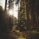 Apoyo al proyecto de Explotación Forestal sostenible